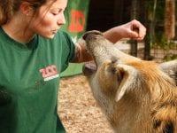Job i Zoo
