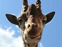 Foto: Zoo