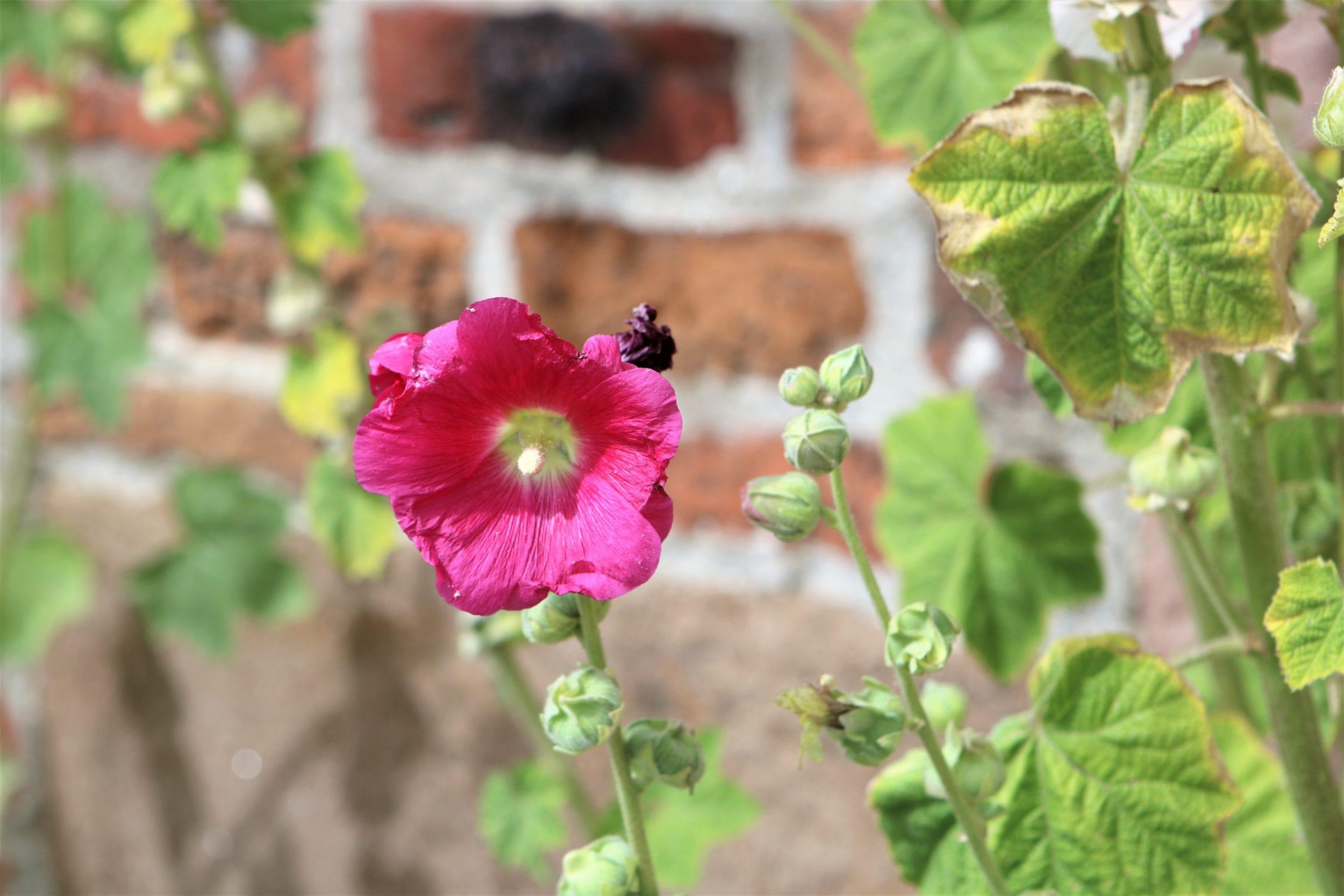 Flere frø på Frederiksberg