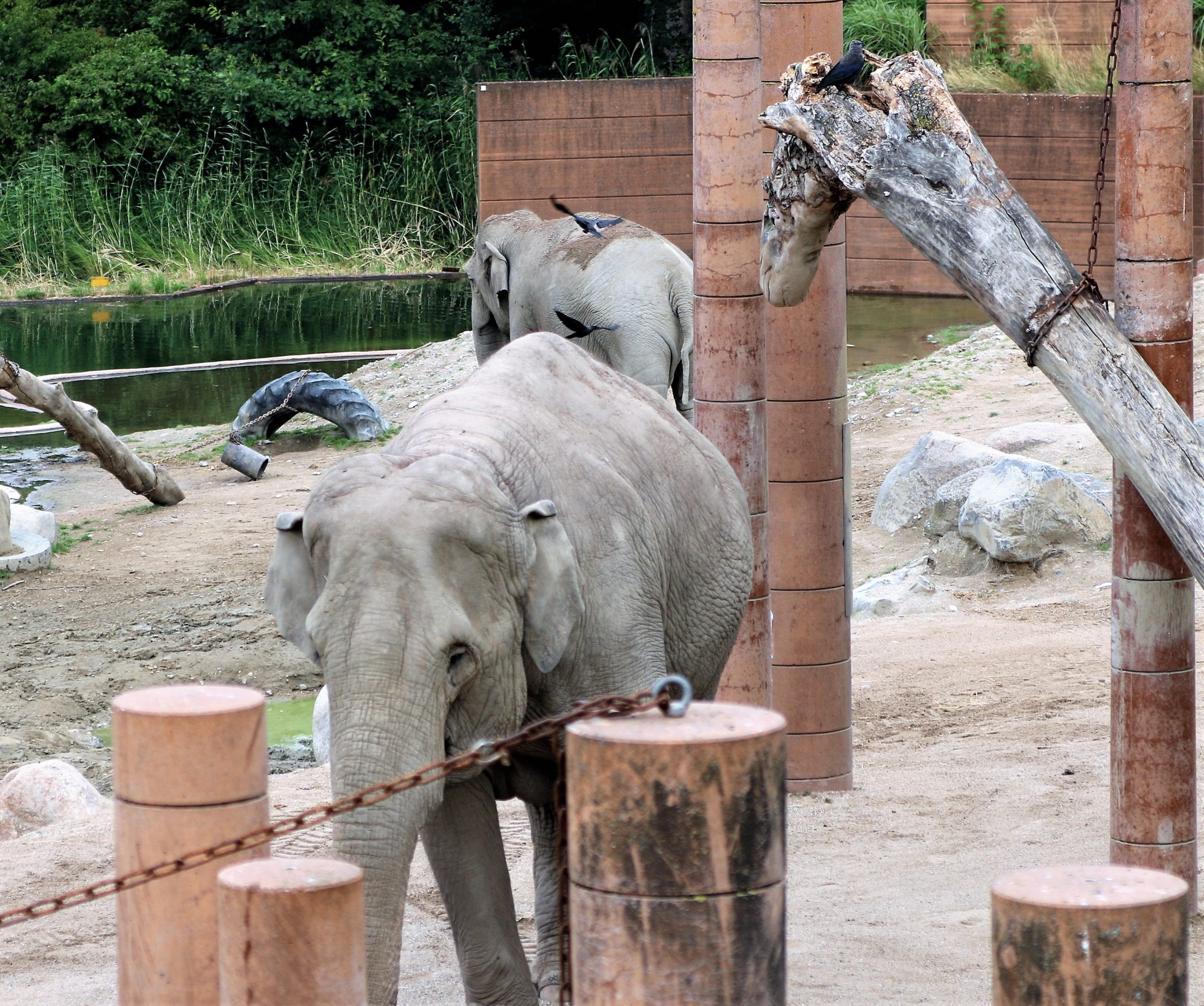 Zoologisk Have holder midlertidigt lukket