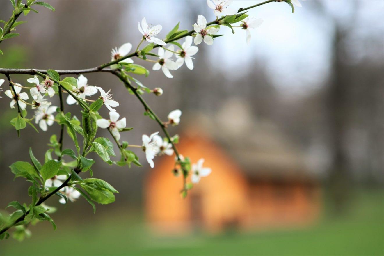 Tidligt 'forår' sender pollen på rekordkurs
