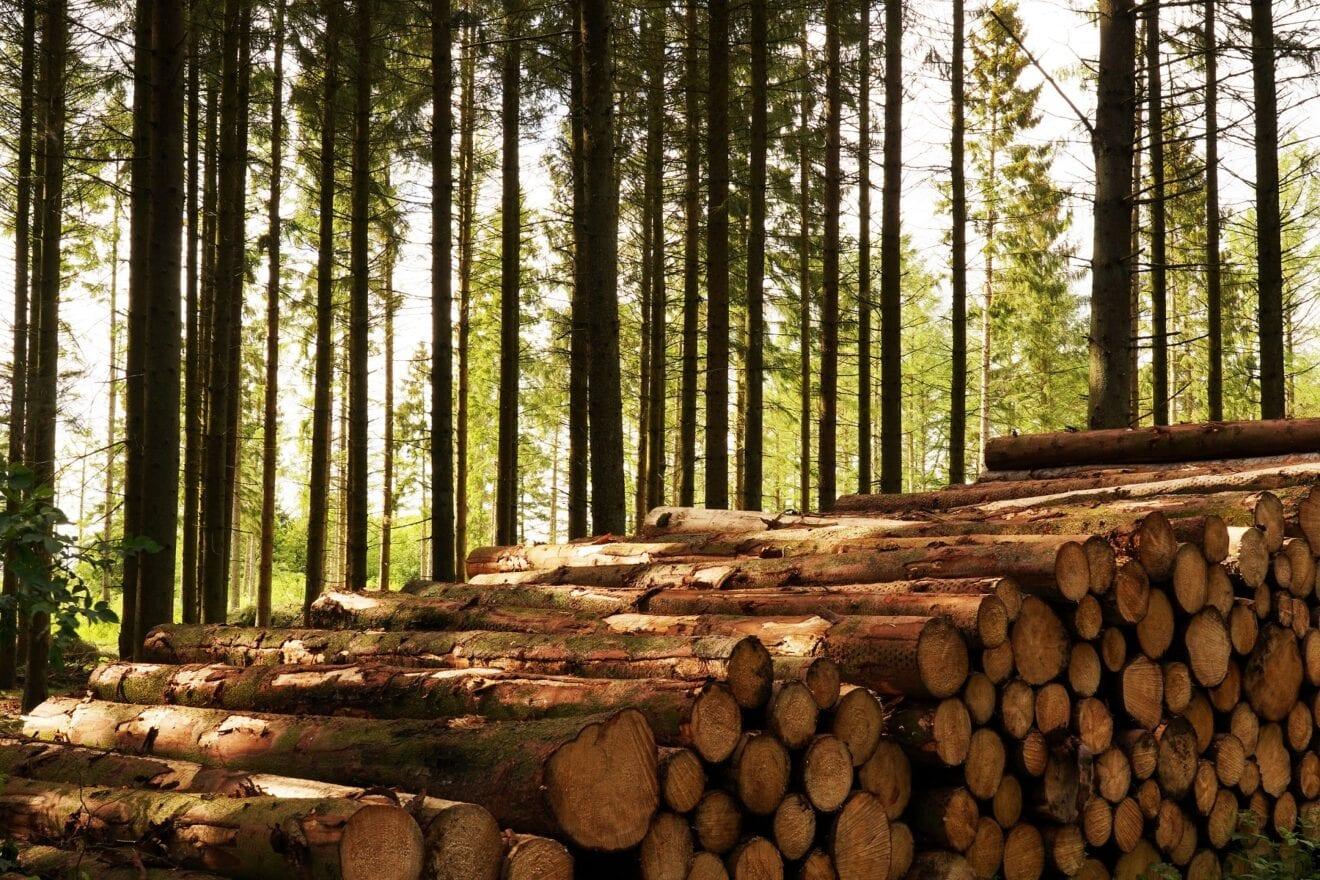 Ny rapport viser, at tilvæksten af skov i Europa langt overgår hugsten