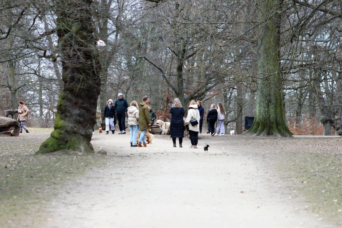 Søndermarkens forår