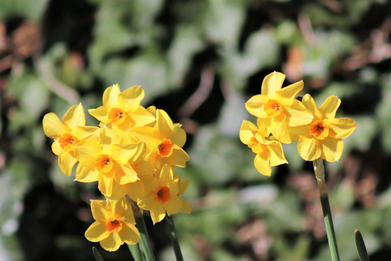 Forår i Haveselskabets Have